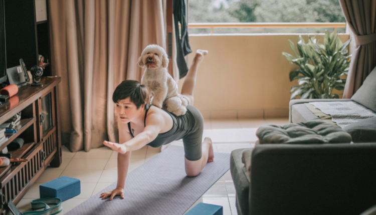A lady doing yoga with a curly dog on her back