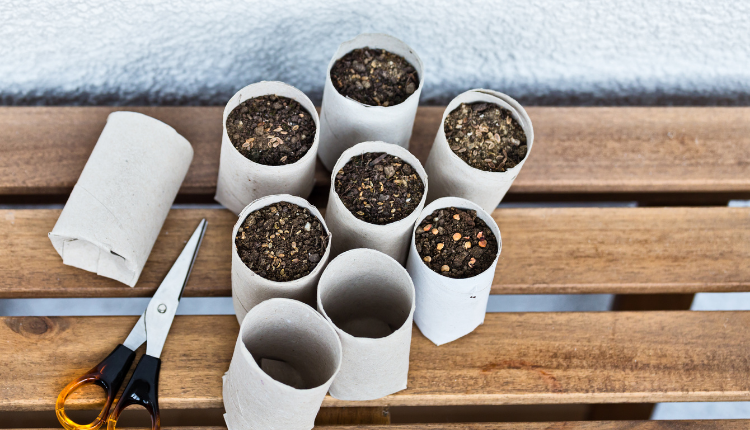 Small toilet roll holder tubes with baby plants in